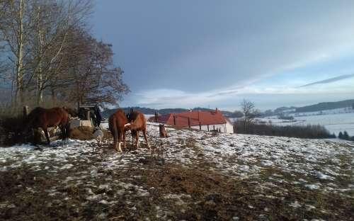 Koně u penzionu