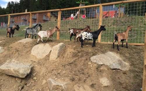 Zookotek v areálu