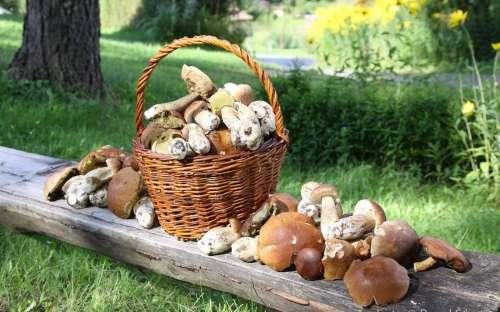 Rostou houby v Beskydech
