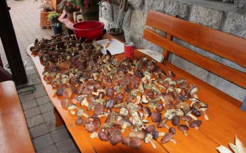 Chalet Tara - mushrooming