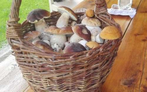 Chalupa v Podzámčí - houbaření