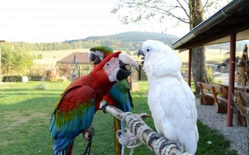 Fauna park i Horní Lipová