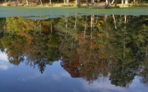 池Němec