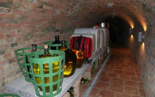 Havraníky camp - wine cellar