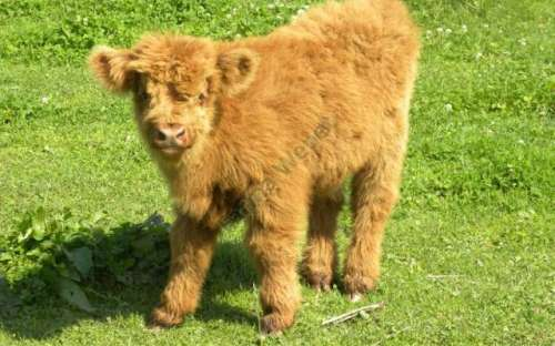 I nostri animali - Wenet Farm
