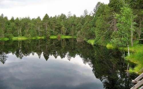 Moss pond on Rejvíz