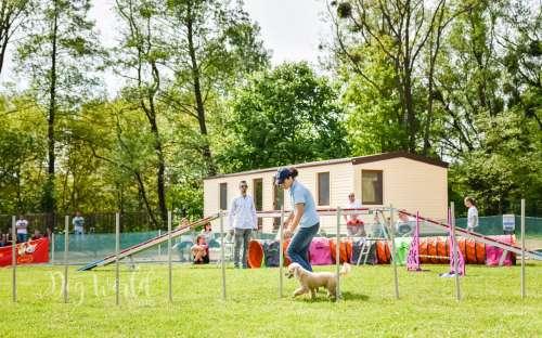 Camp Košice - for dogs