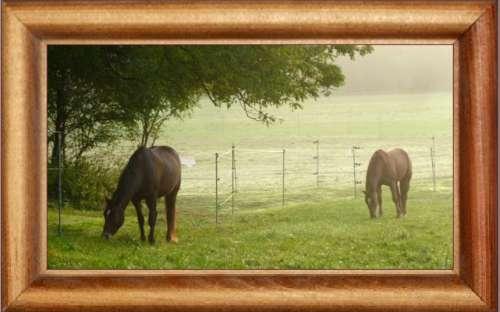 Ustájení koní Plzeň - Postaráme se o Vaše koně jako o ty naše :-)