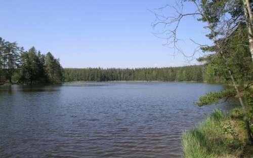 Staňkovský rybník Jižní čechy