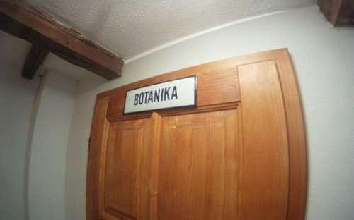 kamer plantkunde