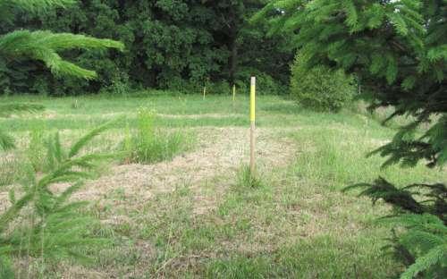 Met gras begroeide veld