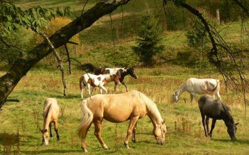 Koně na ranči