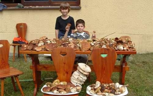 Aktivity v okolí chaty - houbaření