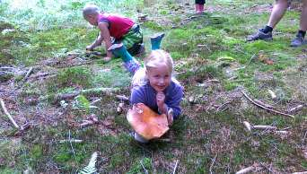 Mushrooming - Camping Karolina