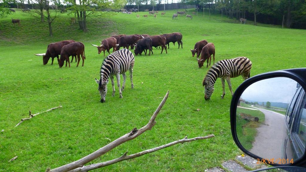 https://www.kempy-chaty.cz/sites/default/files/turistika/safari_dvur_kralove.jpg