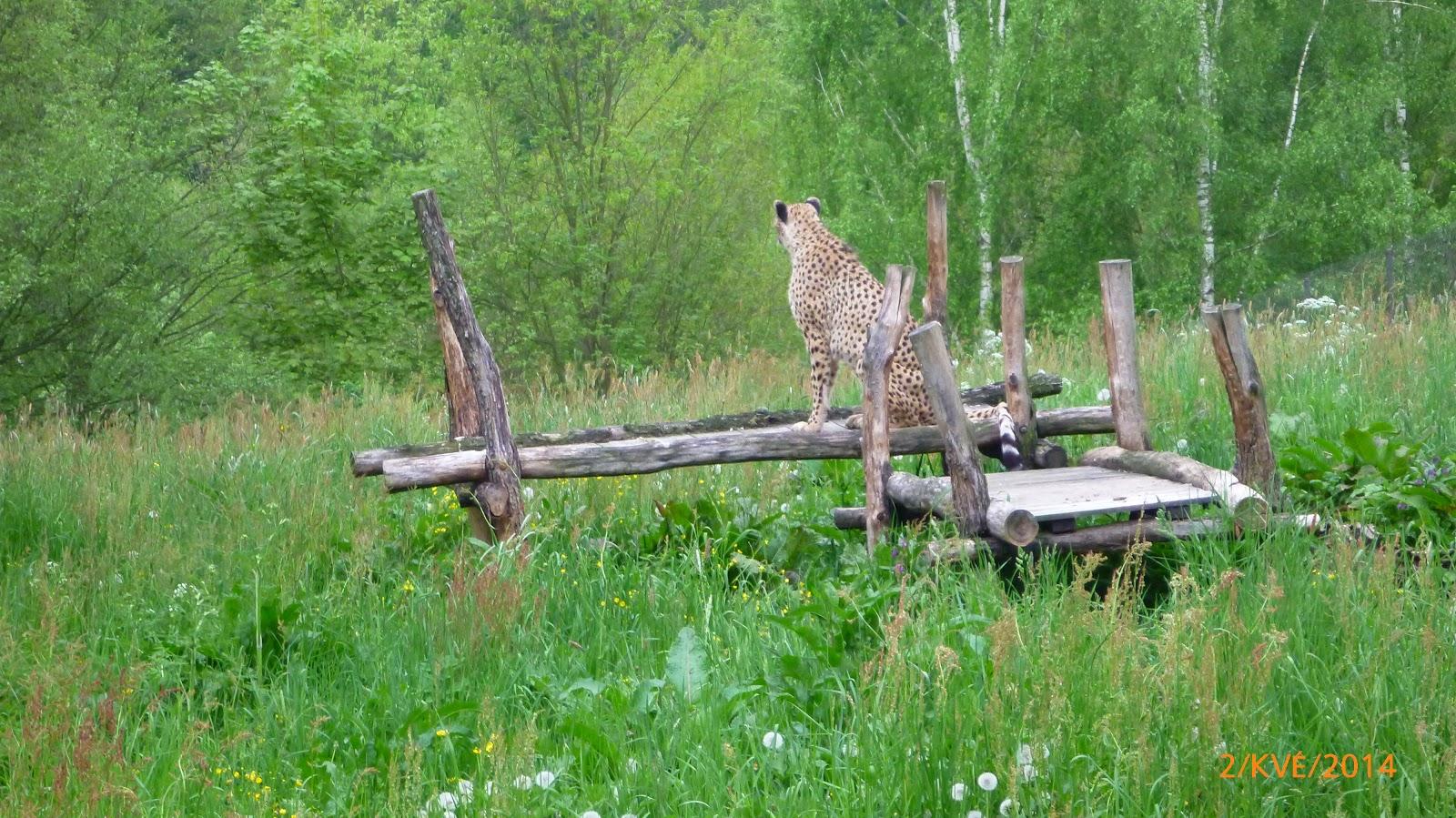 https://www.kempy-chaty.cz/sites/default/files/turistika/safari_dvur_kralove1.jpg