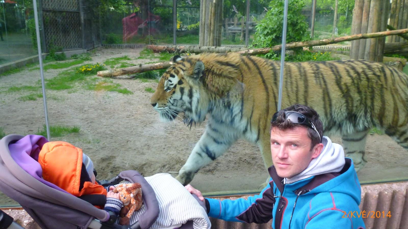 https://www.kempy-chaty.cz/sites/default/files/turistika/safari_dvur_kralove2.jpg
