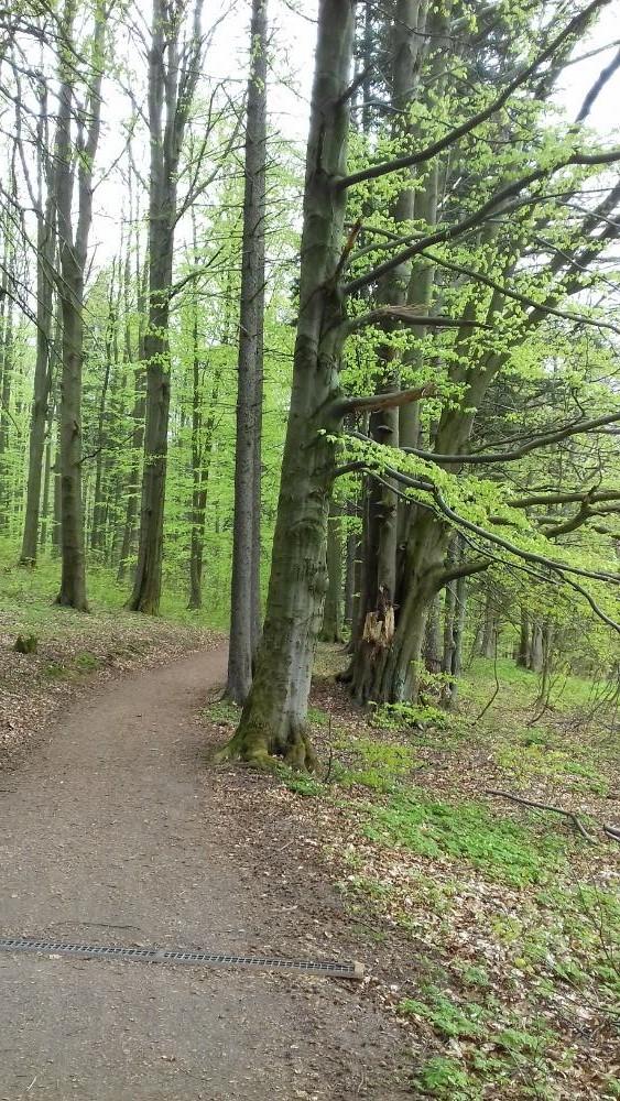 https://www.kempy-chaty.cz/sites/default/files/turistika/v_lese.jpg